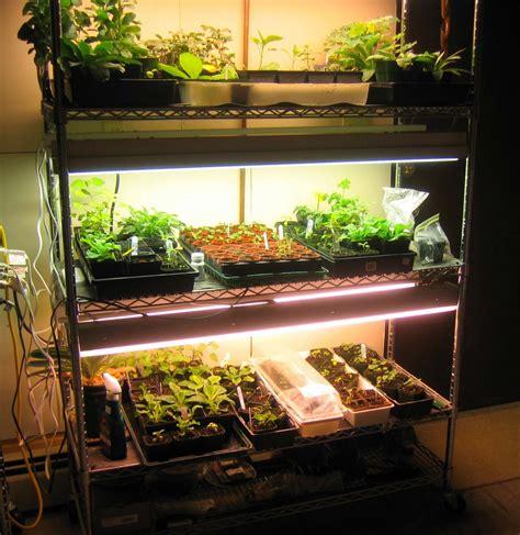 grow lights for indoor plants canadian tire northern exposure gardening basement grow op
