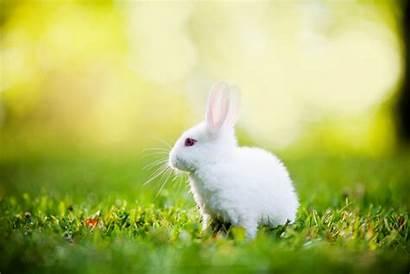 Rabbits Rabbit Desktop 4k Wallpapers Bunny Bunnies