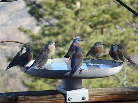 birdbaths and misters