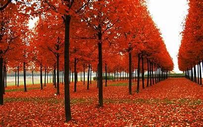 Season Fall Backgrounds Autumn Seasons Wallpapers Wallpapertag