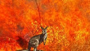 Australian Wildfires Incinerate Over 1 Billion Animals