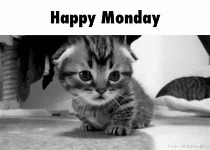 Giphy Monday Gifs Animated Happy Cat Animal