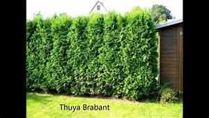 Haie Naturelle Brise Vue : haie brise vue brise vent anti bruit planter une ~ Premium-room.com Idées de Décoration