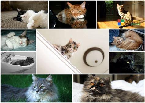 cats themes  windows  windows planet