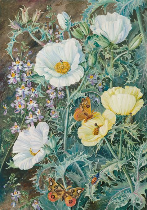 11 Mexican Poppies, Chilian Schizanthus And Insects