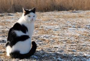 cat and cow cow cat pets