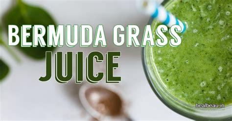Bermuda Grass/arugampul (அருகம் புல்) For Health