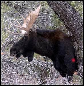 Black Bear Vitals Diagram
