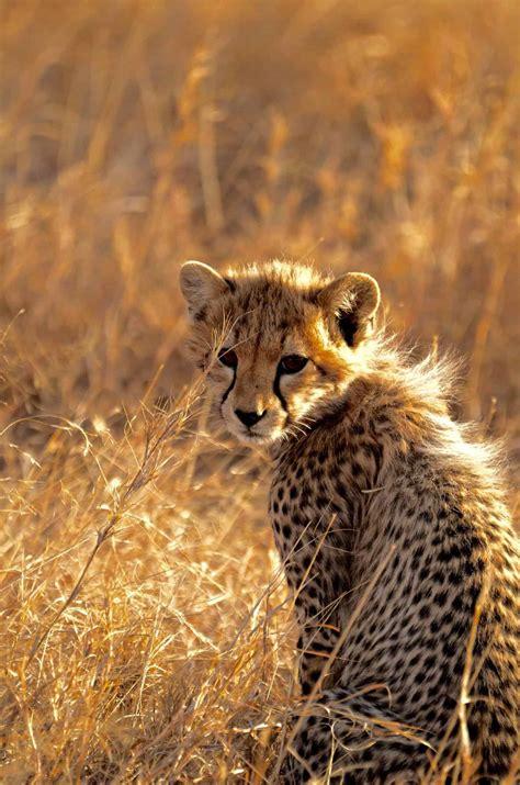 Tanzania Kenya Safari 10 Days   Viva Africa Tours