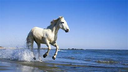 Horse Wallpapers Horses Pretty Hourse