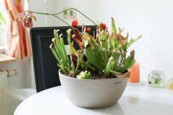 Erbse Am Band : majas pflanzenblog rund um zimmer gartenpflanzen ~ Frokenaadalensverden.com Haus und Dekorationen
