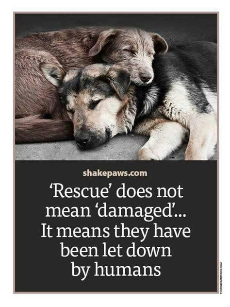 images  dog rescue fundraising ideas