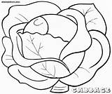 Cabbage Colouring Pages Coloring Dietary Fiber Picolour sketch template