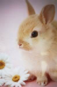 ウサギ:うさぎ ウサギ カワイイ ...
