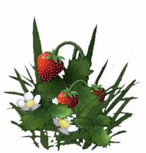 Plant De Fraise : tubes fruits page 4 ~ Premium-room.com Idées de Décoration