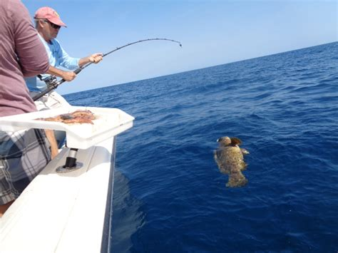 grouper goliath bottom fishing reel rod rods torium bay tampa jigging rigs conventional shimano amberjack season wtb help snapper thehulltruth