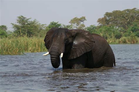 Panoramio - Photo of Liwonde National Park Malawi