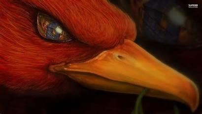 Phoenix Bird Fantasy Wallpapers Fire Eye Cool