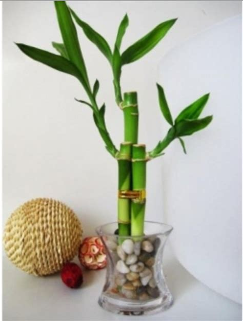 feng shui plants for office desk how to use feng shui in your workspace the muse office