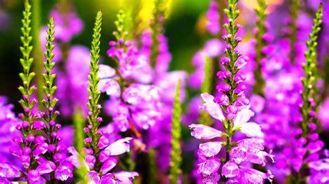 Fond D écran Fleur Meilleurs Fonds D Crans Paysages Et Fleurs Fond Ecran Pc Fond D Cran Pc Fleur Fond Ecran Fleurs