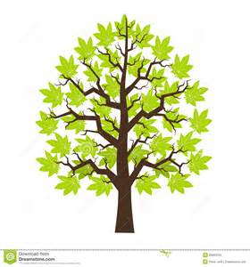 tree maple with green leafage stock images image 29283034