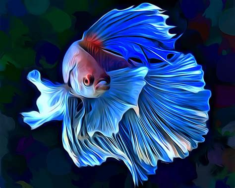 betta fish 1 portrait digital art by scott wallace