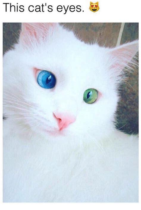 This Cat's Eyes  Meme On Sizzle