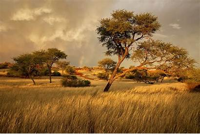 Africa Landscape Grass Tree Namibia Nature Savannah
