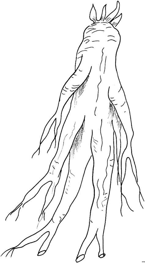 kraeuter einfache wurzel ausmalbild malvorlage blumen