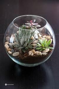 Sukkulenten Im Glas Pflanzen : diy 5 arten um sukkulenten und kakteen zu stylen ~ Eleganceandgraceweddings.com Haus und Dekorationen