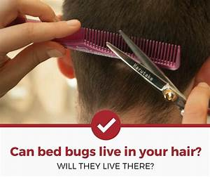 Can bed bugs live in your hair surprising answer for Can bed bugs live in your hair