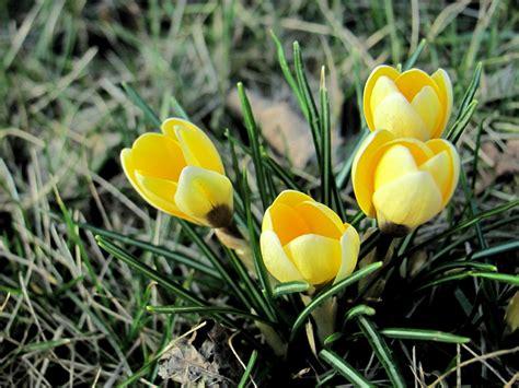 Pilze Im Rasen Anzeichen by Die Ersten Im Rasen Foto Bild Pflanzen Pilze