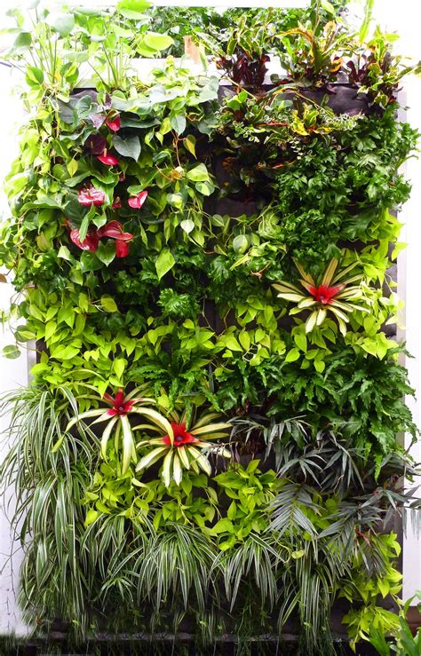 plants  walls vertical garden systems july