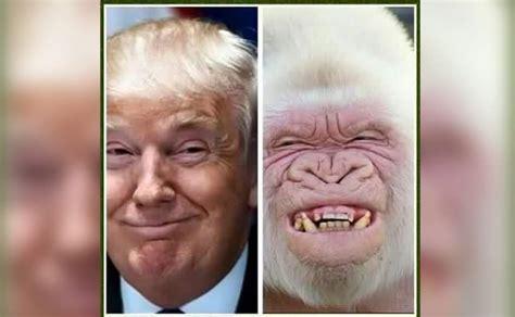 Memes De Trump - las seis posibles sorpresas de octubre en las elecciones en eeuu surysur