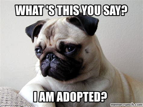 Funny Pug Memes - funny pug meme
