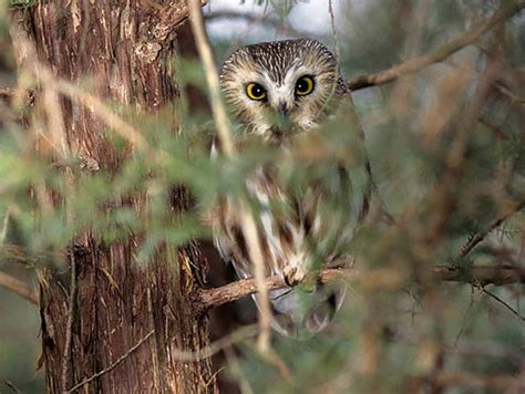 spotting owls is featured topic at salem county nature