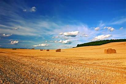 Harvest Diversos Favourites
