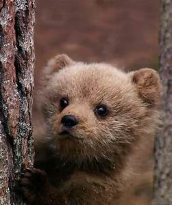 brown bear gif | Tumblr