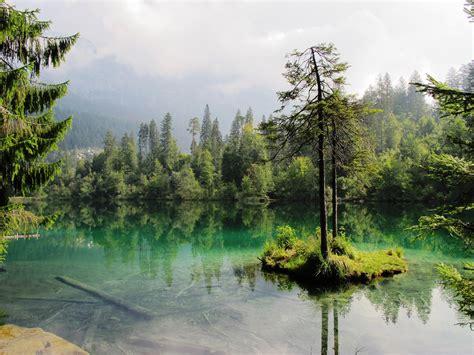 images gratuites paysage arbre la nature marais