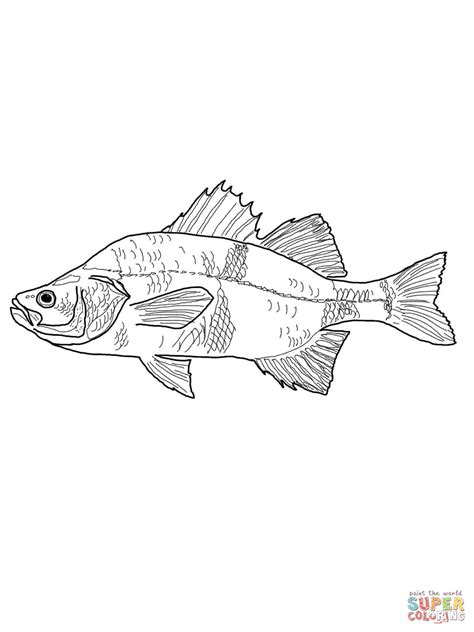 white perch coloring page  printable coloring pages