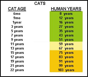 cat years chart how old is your pet in people years mercyvet