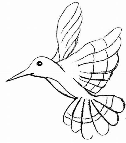 Coloring Birds Pages