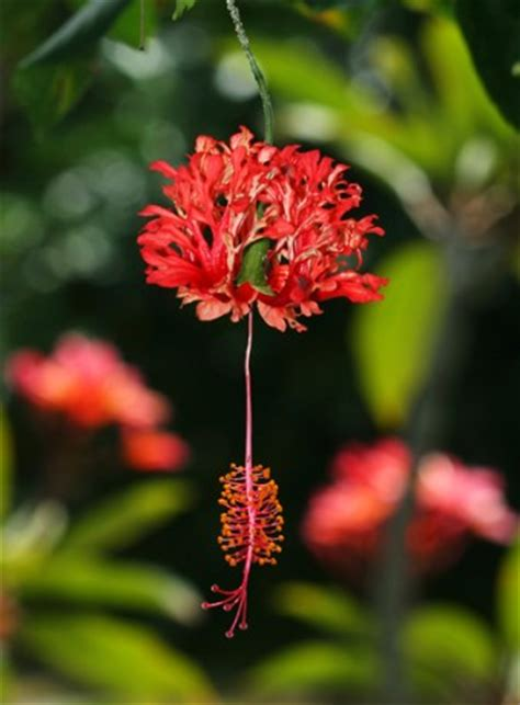 cool tropical plants   find  exotica