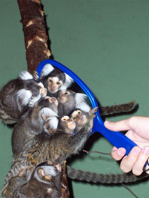 toronto zoo animal enrichment