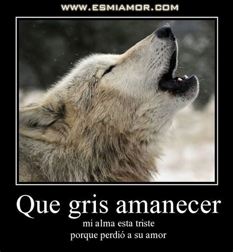 Imagenes De Lobos Con Frases Tristes ۰ Bienvenidos ۰ Sentimientos