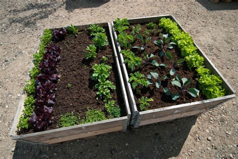 tomatenpflanzen balkon hochbeet selber bauen so gelingt es ihnen