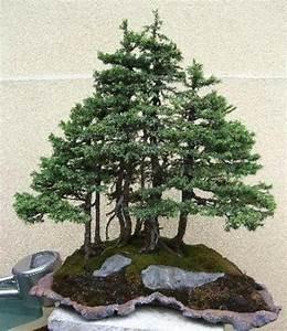 Pflege Von Bonsai Bäumchen : bonsai pflanzen bonsai pflanzen pflege und tipps mein sch ner garten bonsai baum diese ~ Sanjose-hotels-ca.com Haus und Dekorationen