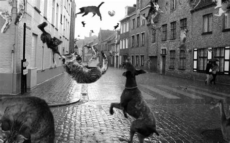 raining cats and dogs it s raining cats and dogs