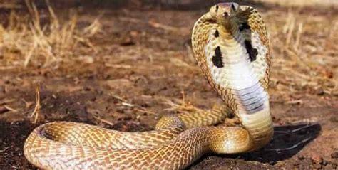 safety toolbox talk snakes