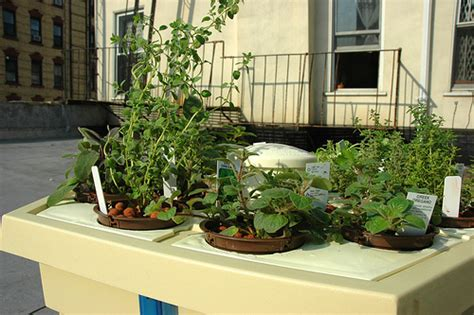 Hydroponic Herb Garden On The Roof